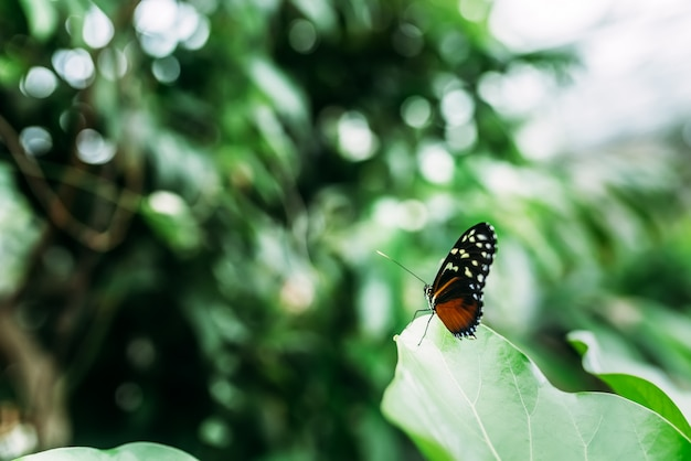 Farfalla in giardino. avvicinamento.