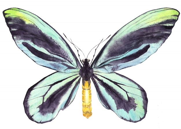 Farfalla indaco blu acquerello.