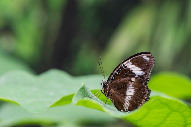 Farfalla marrone di vista laterale sulle foglie