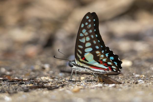 Farfalla multicolore da vicino