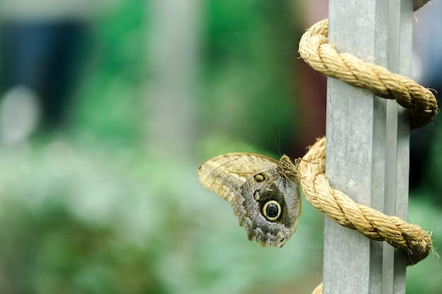 Farfalla nella fine tropicale della foresta in su.