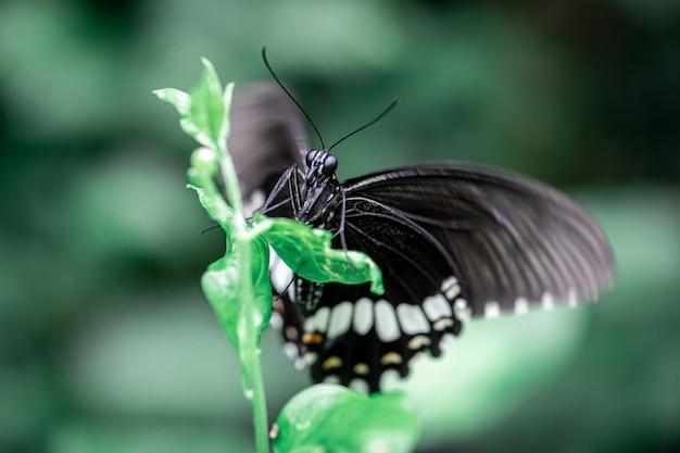 Farfalla nera sulla cima dell'albero