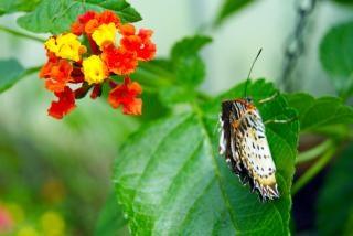 Farfalla primo piano la natura