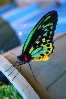 Farfalla primo piano vicino