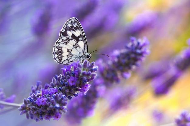 Farfalla seduta su un fiore viola