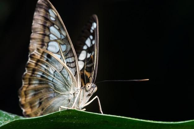 Farfalla su foglia con sfondo nero