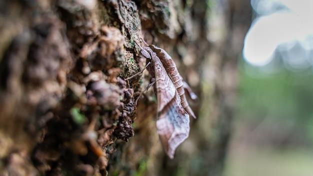 Farfalla su foglie secche