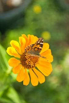 Farfalla su un fiore d'arancio