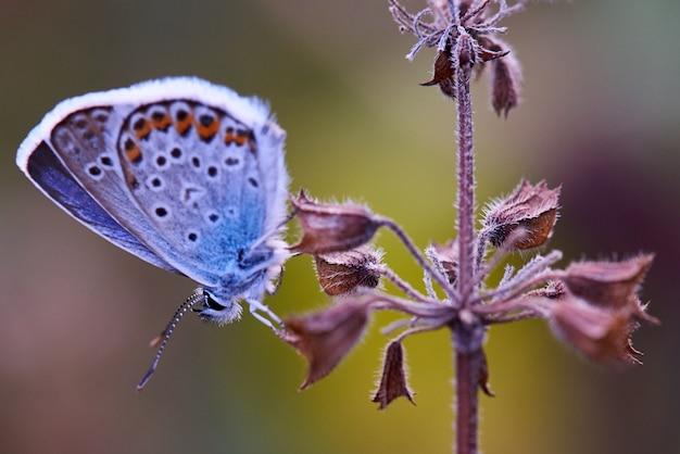 Farfalla su un fiore nella fine di luce solare in su.