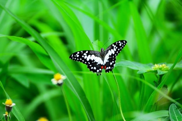 Farfalla sul fiore di erba con foglie verdi come sfondo