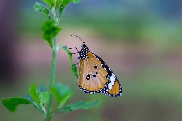 Farfalla sulle foglie
