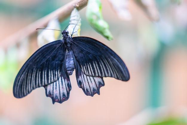 Farfalle colorate tropicali