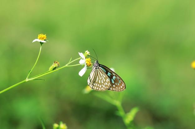 Farfalle e fiori in un bellissimo giardino.