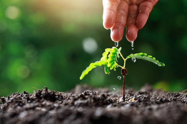 Farmer hand innaffiando le giovani piante del bambino