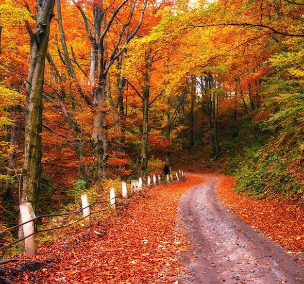 Fata vicolo d'autunno