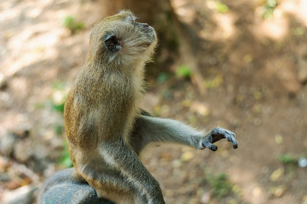 Fauna selvatica scimmia dell'asia