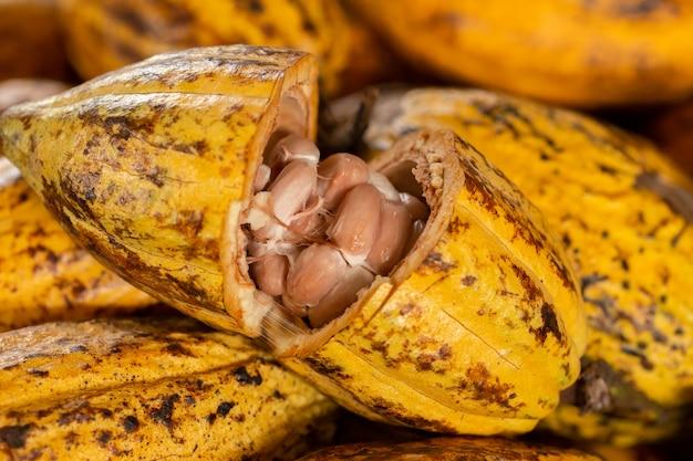 Fave di cacao e baccello di cacao su una superficie di legno