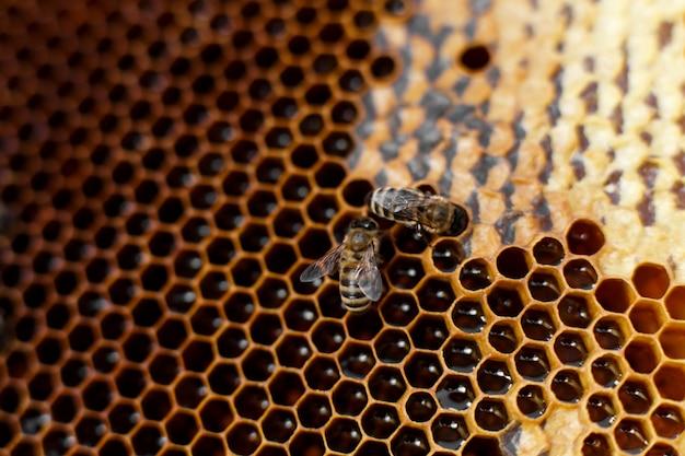 Favo alto vicino di colore naturale in alveare di legno con le api su