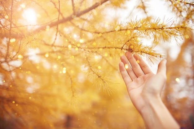 Favola dorata di autunno con gli alberi gialli nella foresta, luce solare nel ramo.