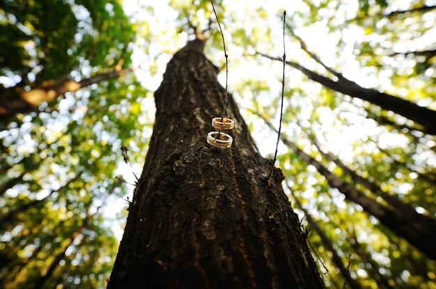 Fedi nuziali su un ramo di un albero