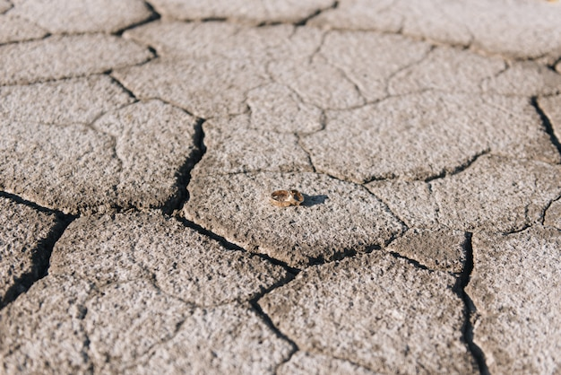 Fedi nuziali su uno sfondo di terra screpolata