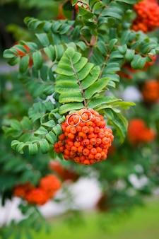 Fedi nuziali sul mazzo di bacche arancio della cenere di montagna con lo sfondo delle foglie verdi della sorba