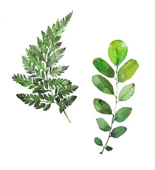 Felce e foglie dipinte a mano dell'acquerello. illustrazione verde