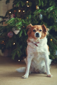 Felice anno nuovo, natale, vacanze e celebrazione, simpatico cane nella stanza dell'albero di natale