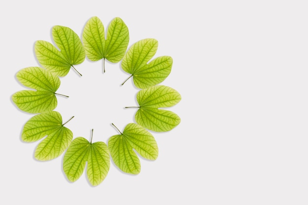 Felice dussehra, foglie in cerchio con spazio di copia