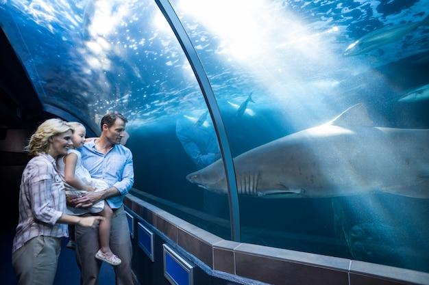 Felice fa, guarda lo squalo in una vasca