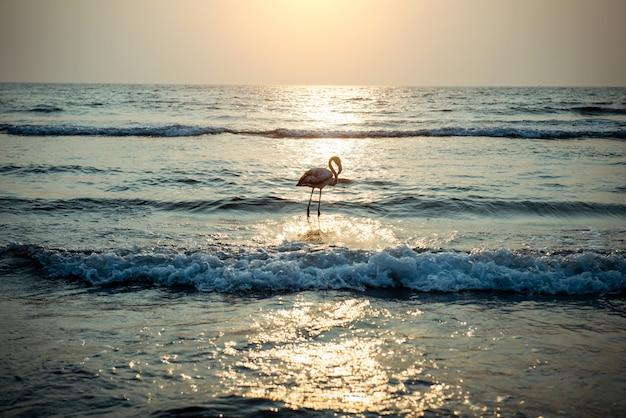 Fenicotteri sull'oceano nei raggi del tramonto.