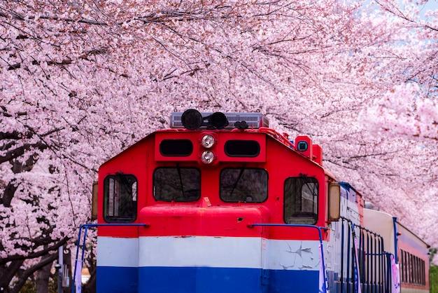 Festival dei fiori di ciliegio alla stazione ferroviaria di gyeonghwa