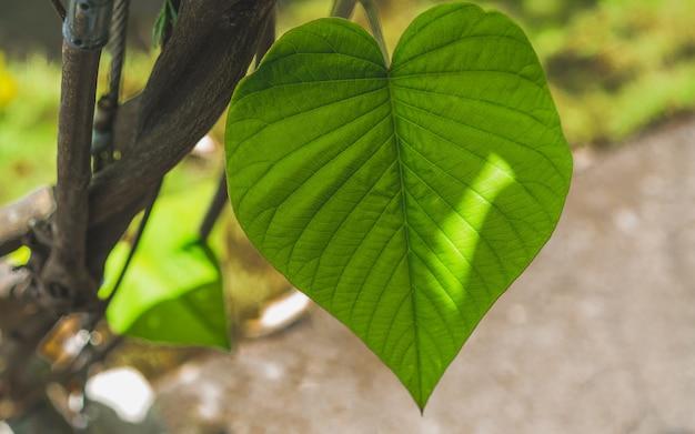 Fibra di foglie verdi fresche