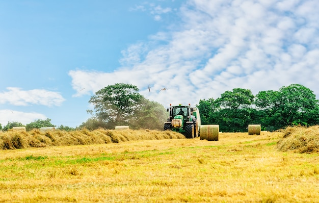 Fieno di taglio del trattore nell'ora legale contro il cielo nuvoloso blu, mucchi di fieno sul campo