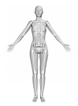 Figura femminile 3d con pelle liscia e scheletro