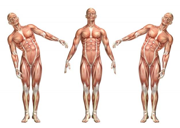 Figura medica 3d che mostra la flessione laterale del tronco