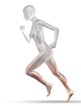 Figura medica femminile 3d con jogging a mappa muscolare parziale