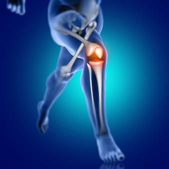 Figura medica maschio 3d che funziona con l'osso di ginocchio evidenziato
