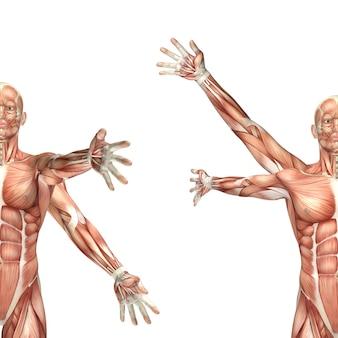 Figura medica maschio 3d che mostra la circumduzione della spalla