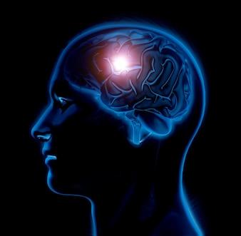 Figura medica maschio 3D con il cervello evidenziato