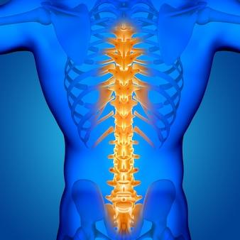 Figura medica maschio 3d con la spina dorsale evidenziata