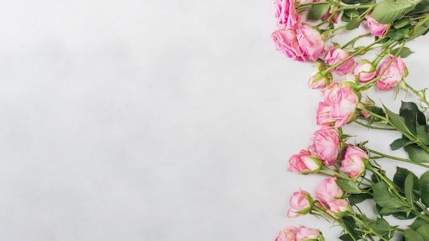 Fila di belle rose fresche