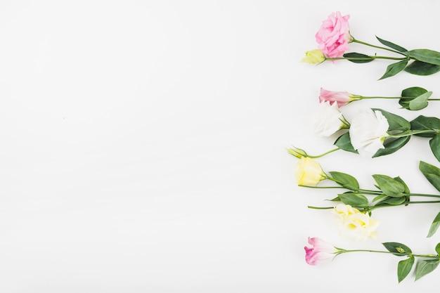 Fila di bellissimi fiori su sfondo bianco