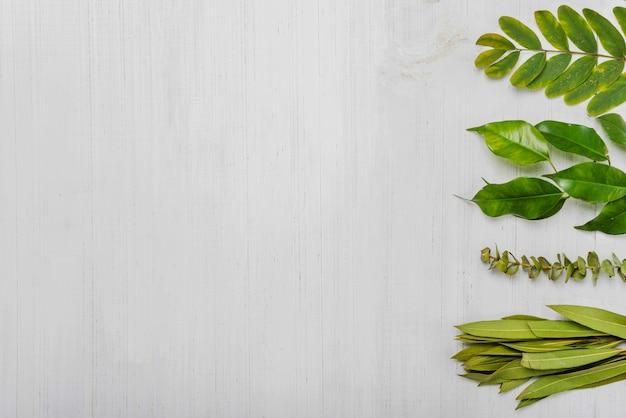 Fila di foglie di piante verdi