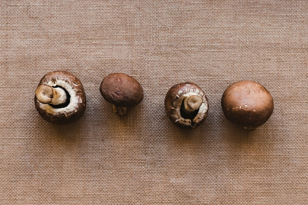 Fila di funghi freschi