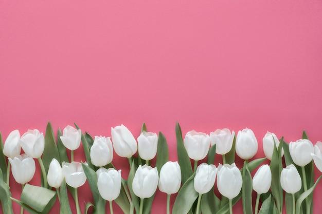 Fila di tulipani bianchi, distesi sul rosa p