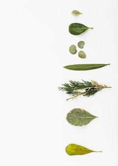 Fila di varie foglie di piante