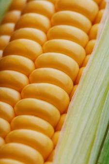 File di chicchi di mais gialli freschi e maturi