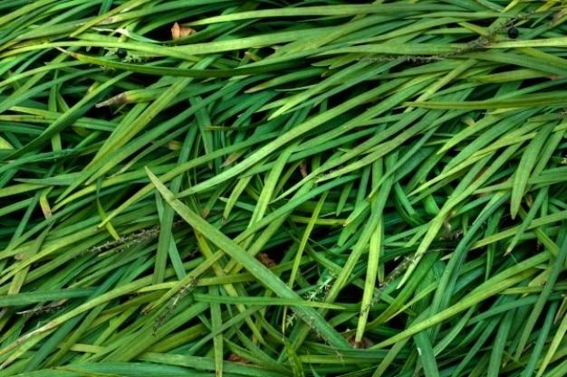 Fili d'erba texture hdr
