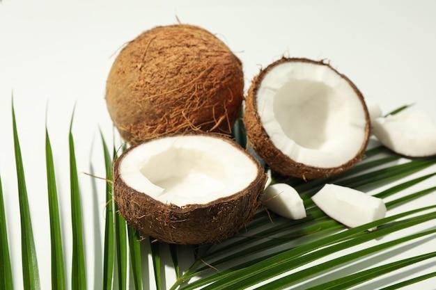 Filiale della palma e della noce di cocco, fine in su